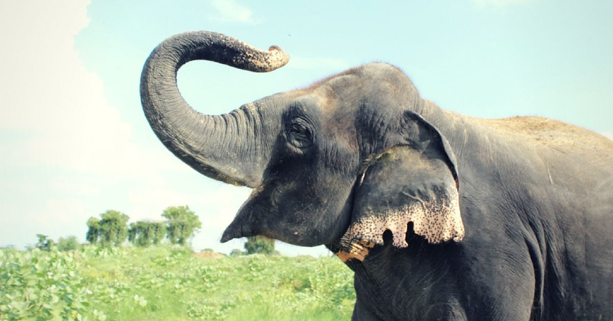 On World Elephant Day, a Look at How One Centre in Mathura Is Nurturing & Helping These Tuskers