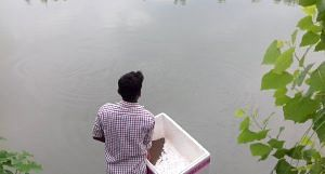 A farmer tends to a fishery developed in the wetlands. (Photo by Mohd Imran Khan)