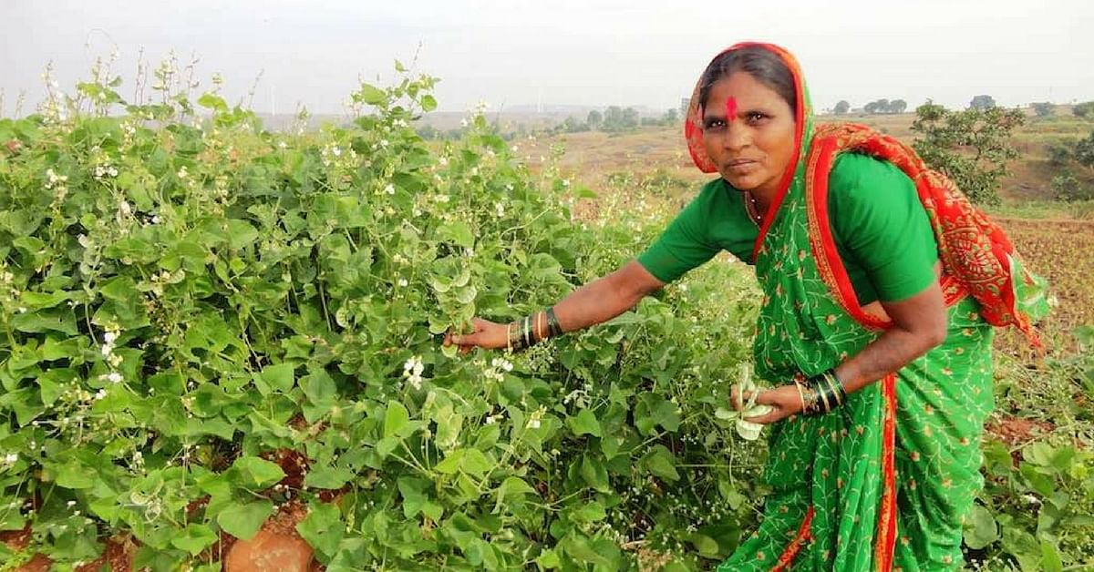 'Seed Mother' Rahibai's Story: How She Saved Over 80 Varieties of Native Seeds!