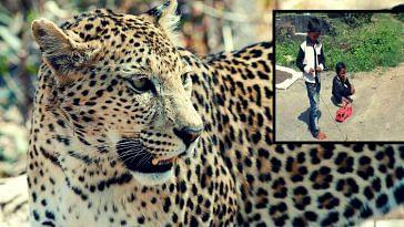 jairaj goel- Gujarat- leopard-attack