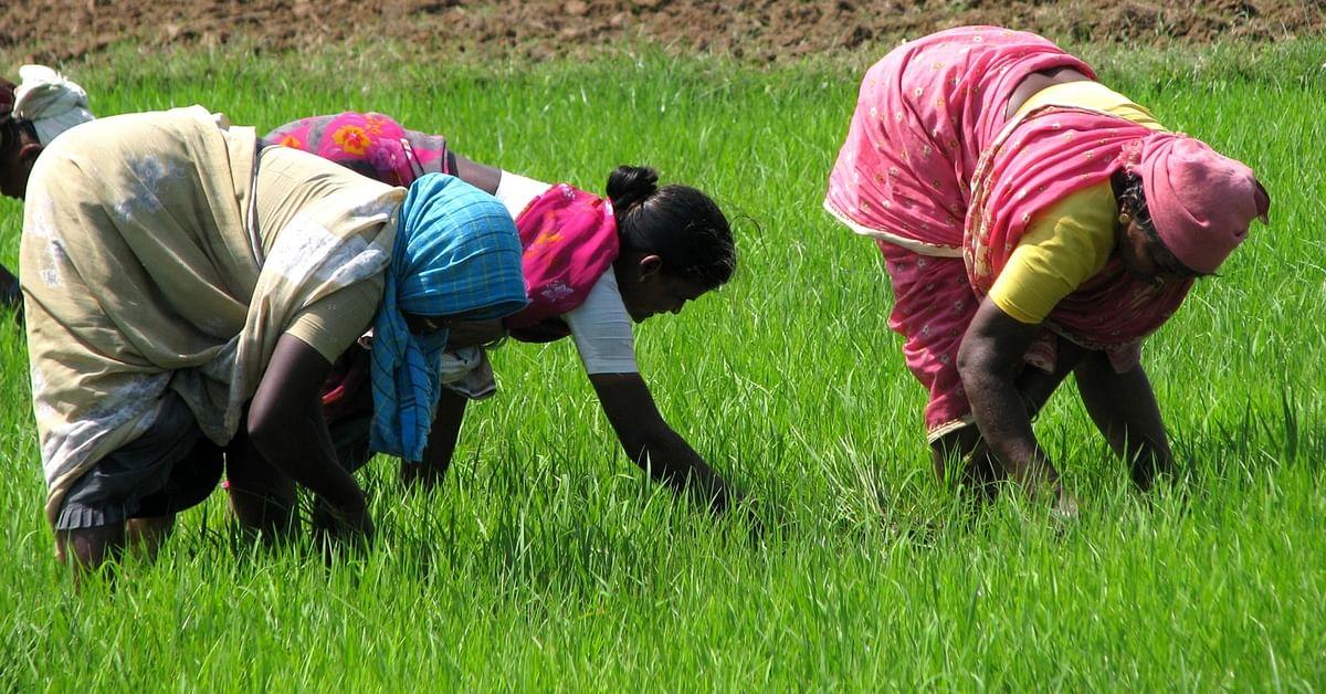 Banks of Ganga, Highways in Bihar All Set to Get Organic Farm Corridors