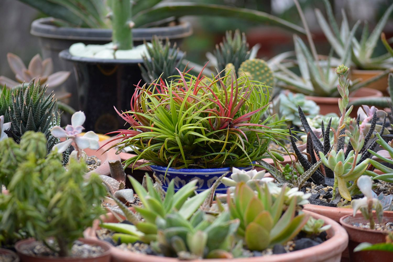 Make Your Own Terrariums Miniature Gardens For Plant Loving Citizens