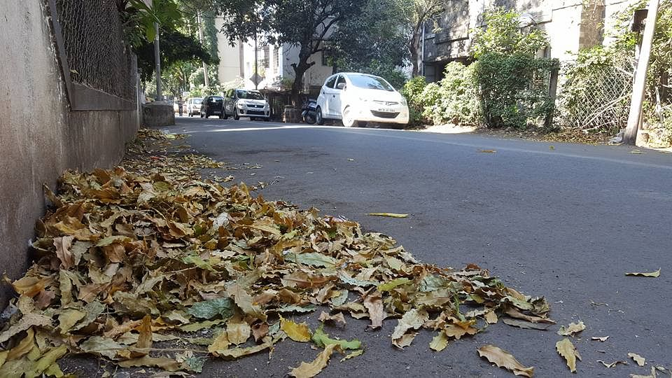 Pune Woman Collects Dry Leaves So They're Not Burnt  Here's Why!