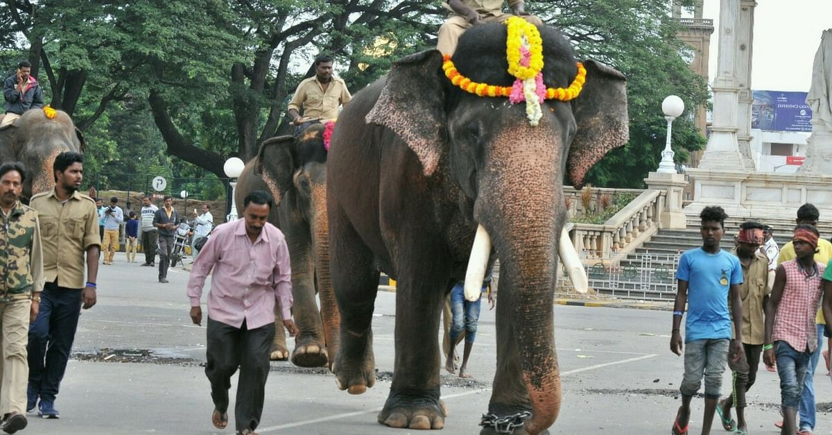 Meet the Braveheart Whose Job Involves Pulling Nails Out of Elephant Feet