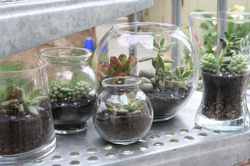 Make Your Own Terrariums Miniature Gardens For Plant Loving Citizens