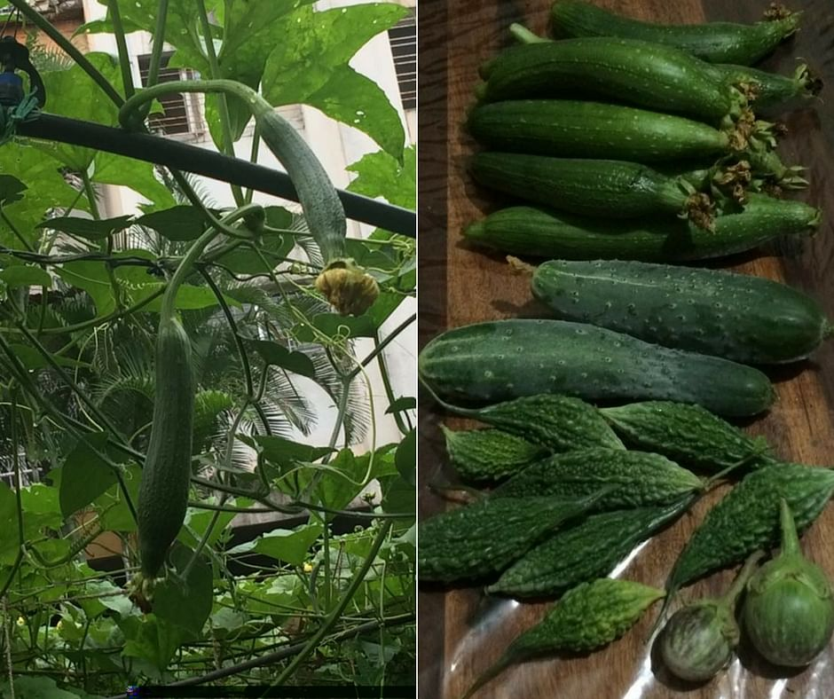 Here's How This Pune Woman Grew Her Own Food Organically