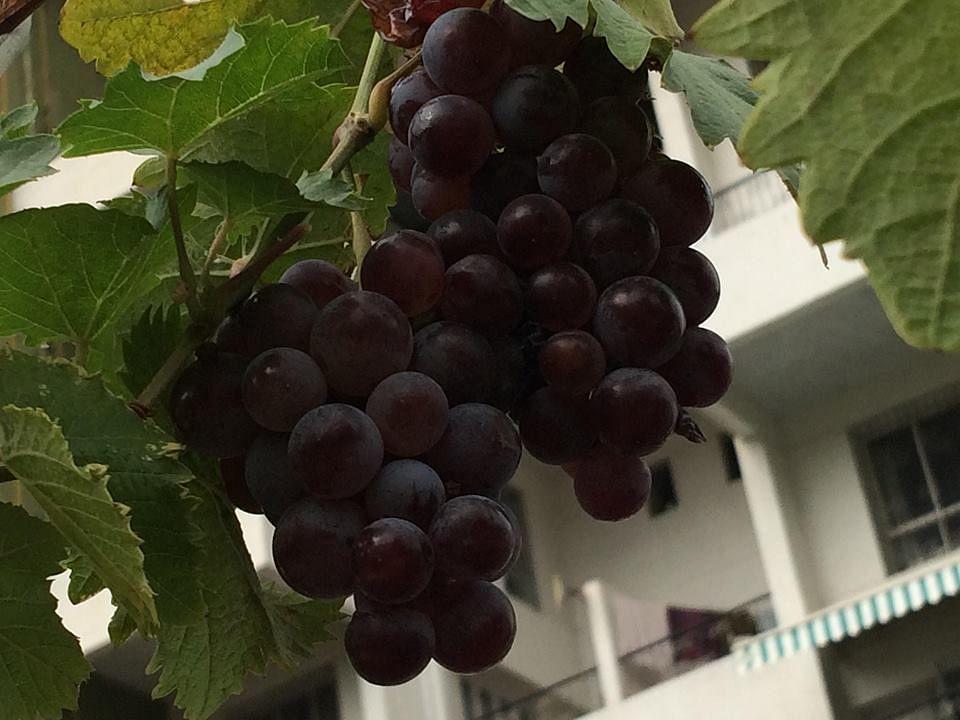 Pune-organic-farming-sujata naphade- final