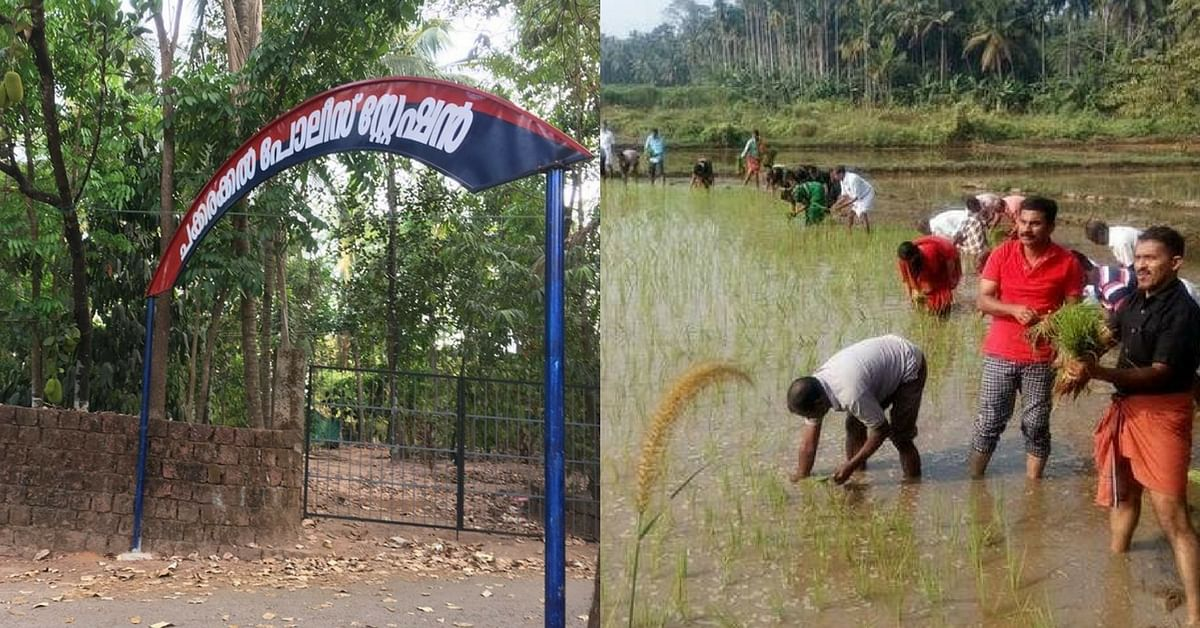 Kerala Cops Try a Hand in Farming by Cultivating Paddy in Kannur's Fallow Fields