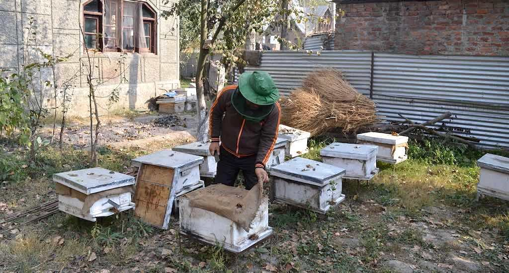As Busy As Bees: Meet The Farmers Making Kashmir a Land of Honey