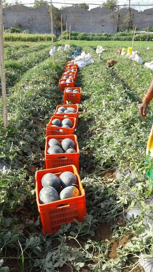 Despite Droughts, This Maharashtra Farmer, Vishwanath Bobade