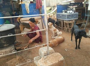 Bengaluru-couple-strays-sai shelter