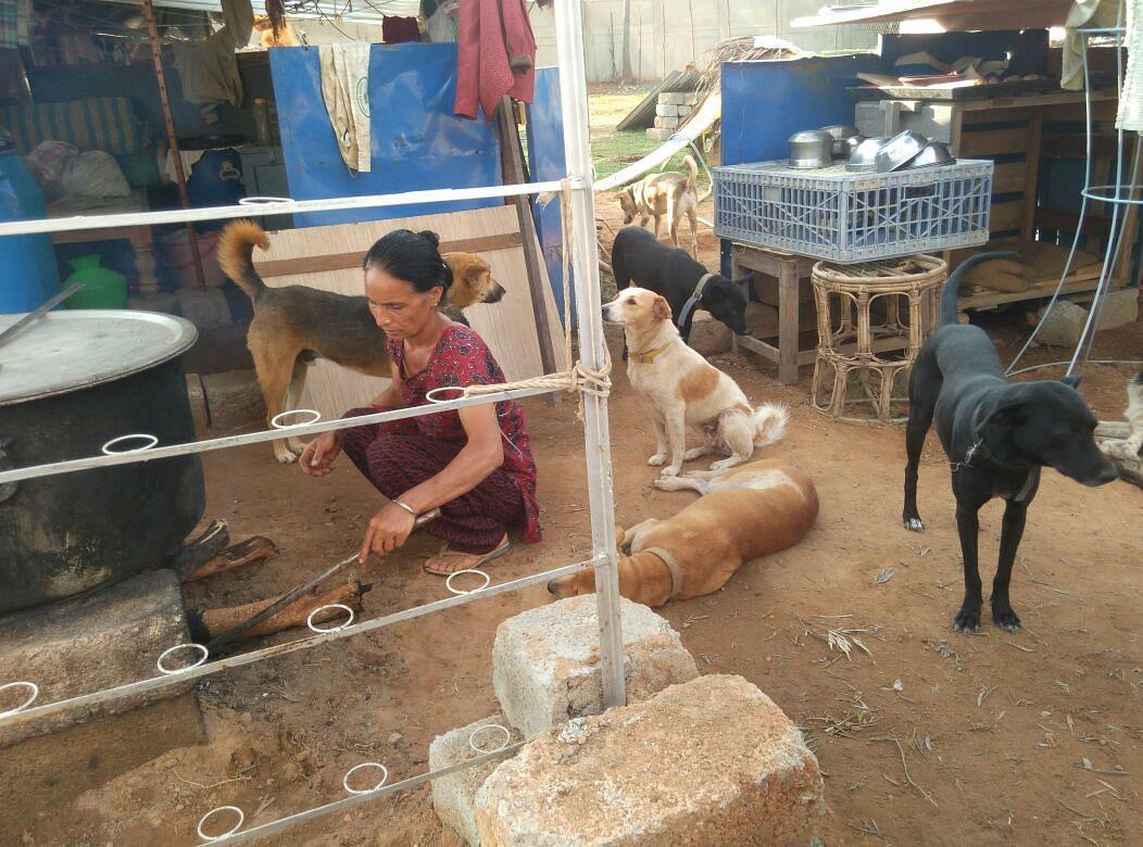 Bengaluru-couple-strays dogs-sai shelter