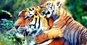 Mudumalai Tiger Reserve- bigger