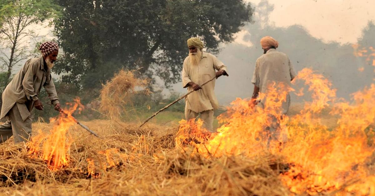 This ₹20 Bottle of Solution Is Punjab Farmers' Answer to Stubble Burning