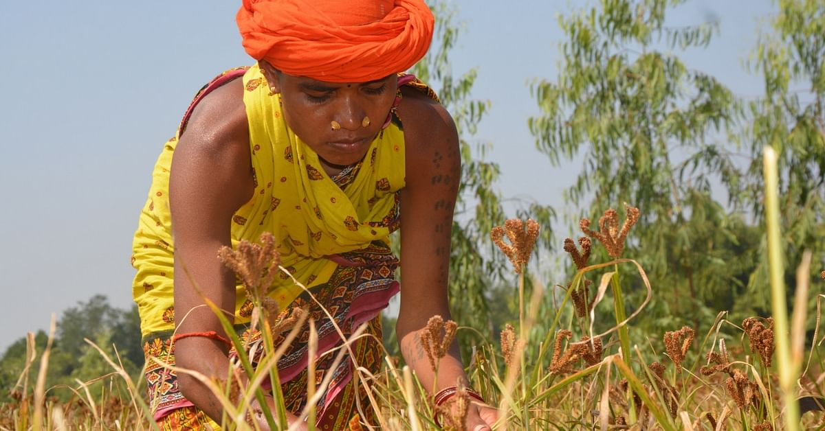 As You Sow, so You Eat: How a Tuber and Some Tricks Beat Malnutrition Among Farmers