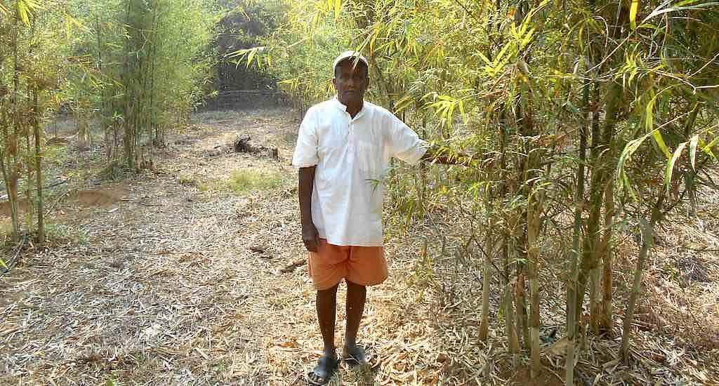 Rane Guruji, an 80-year-old farmer of Kasal village, in his bamboo plantation. (Photo by Hiren Kumar Bose)