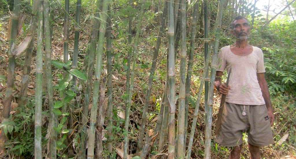 A famer in his bamboo grove in Danoli village of Sindhudurg district. (Photo by Hiren Kumar Bose)