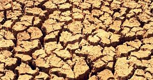 Drought forces farmers to take drastic steps. Representative image only. Image Courtesy:- Wikimedia Commons.