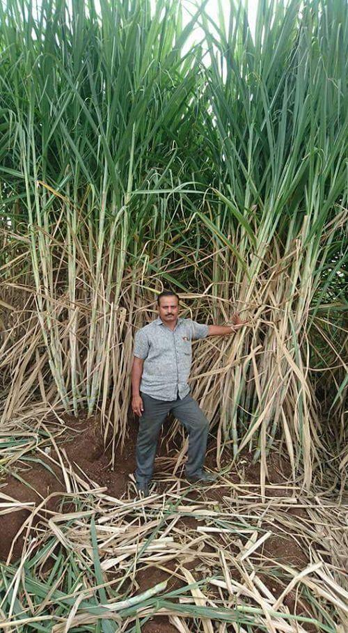 A Farmer from Maharashtra - Suresh Kabade Grew 100 Tonnes of 20-Foot