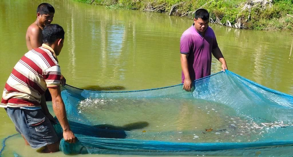 From Rs 3K per Year to Rs 2 75 Lakh a Year: How Fish Seeds