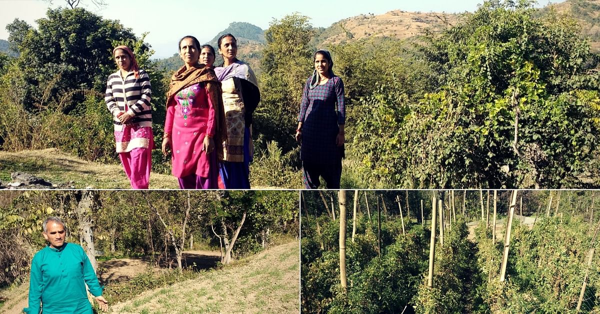 This Himachal Community Not Only Tackled Crop Failure, but Raised a Bumper Crop!