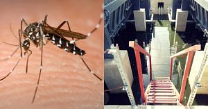 Mosquitoes thrive in stagnant water, and drones can identify these sites.