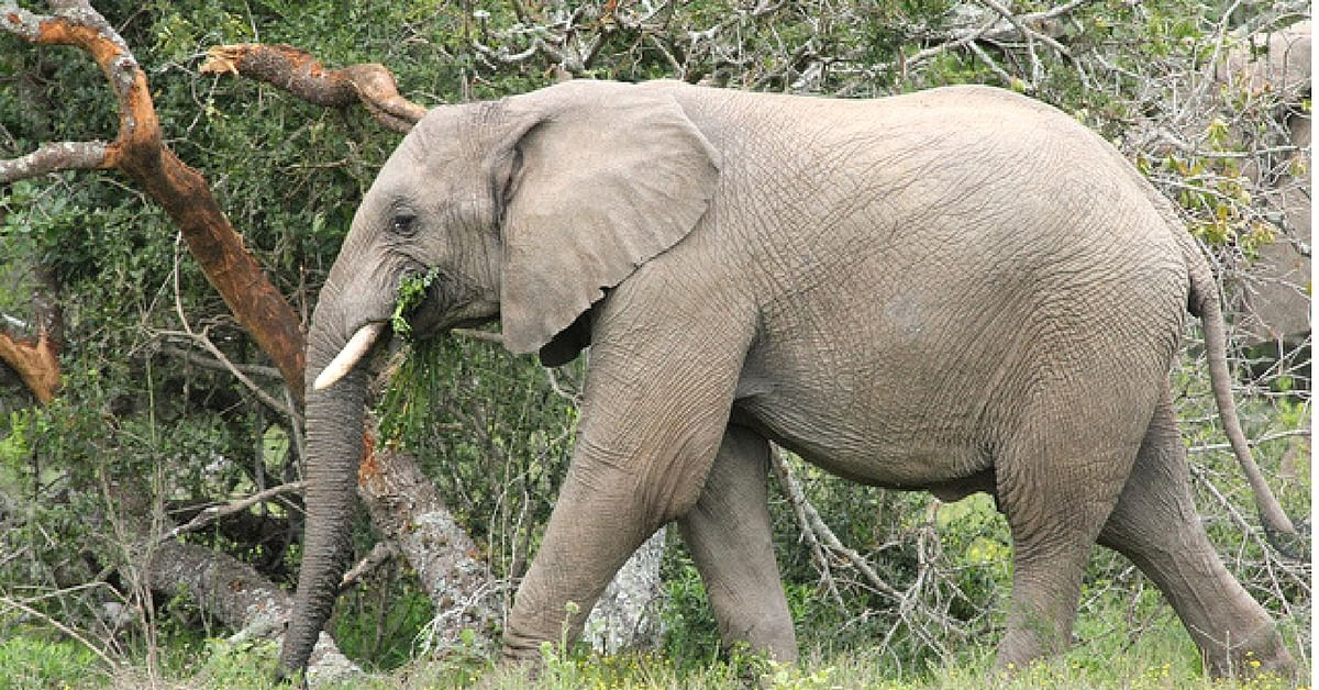This Elephant Rescue Operation Takes 'Kindness to Animals' to Another Level!