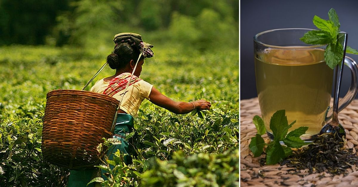 Video: How an Assam Woman Grew One of the Rarest Teas in the World