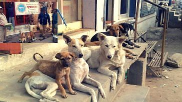 cuttack residents- stray dog funeral-