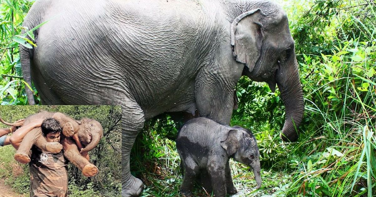 Watch: Mettupalayam Forest Official Carries Baby Elephant to Its Mother!
