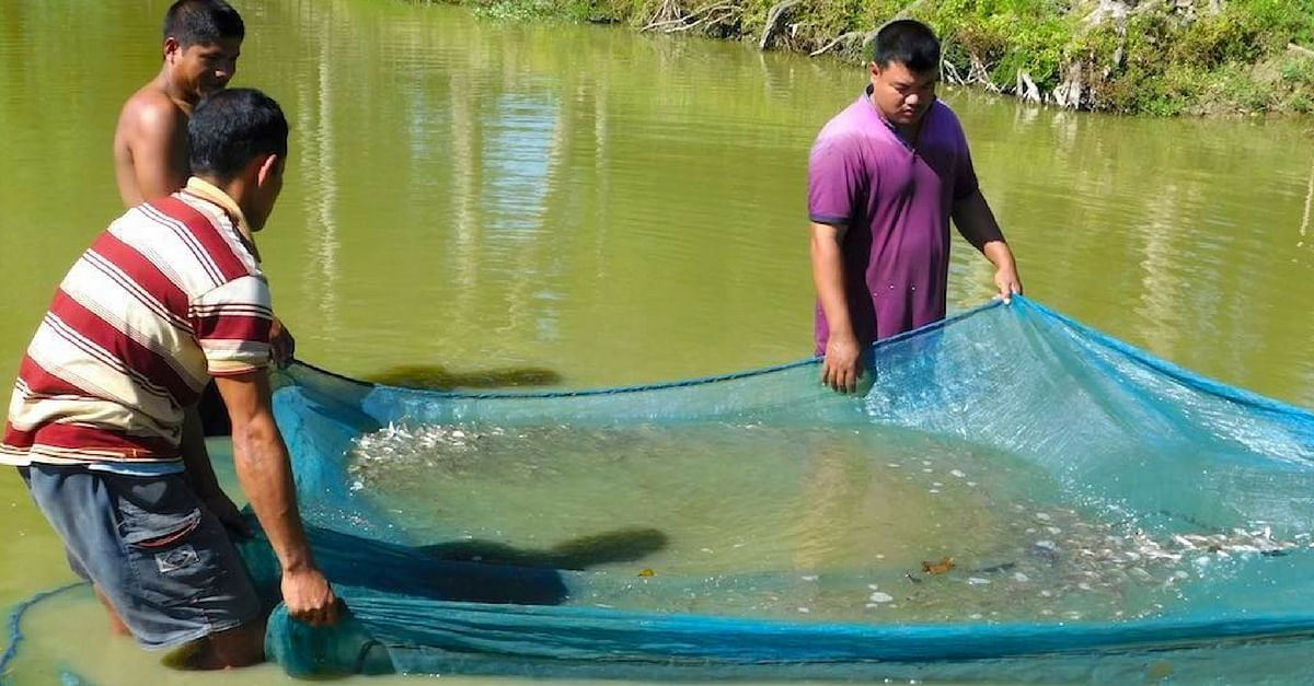 From Rs 3K per Year to Rs 2.75 Lakh a Year: How Fish Seeds Are Transforming Assam