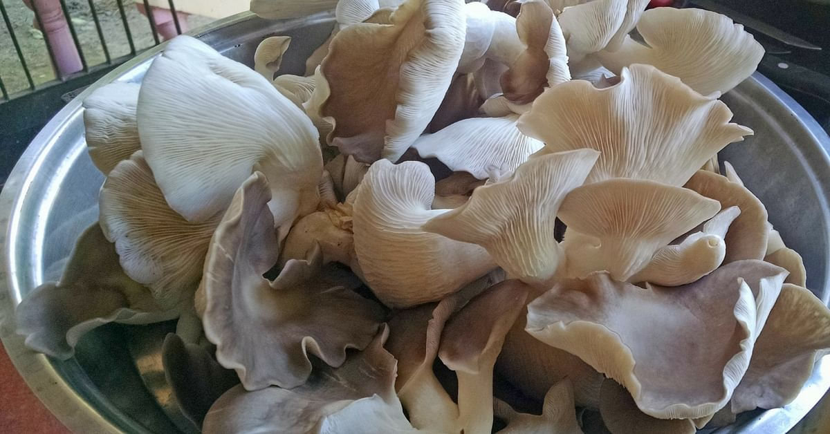 MBA Graduate Turns to Mushroom Farming, Makes Lakhs With Just a 18×45-Foot Shed!