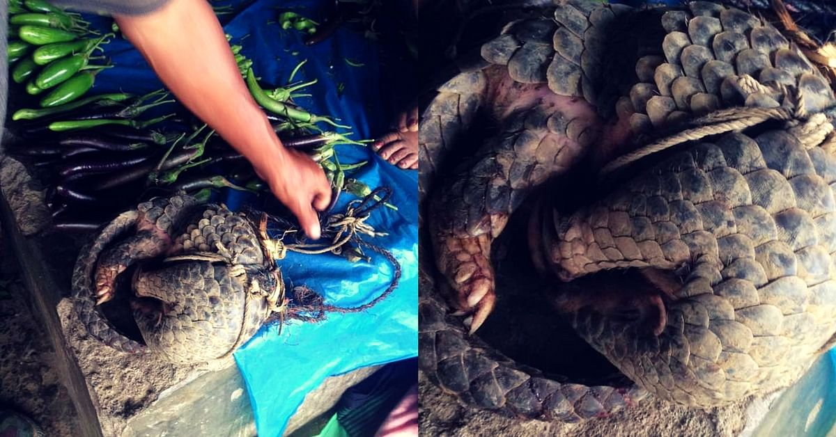 In Manipur A Couple Buys Wildlife From Poachers For An Amazing Reason