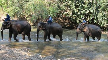 Elephants are often used in national parks and safaris. Representative image only. Image Courtesy:MaxPixel.