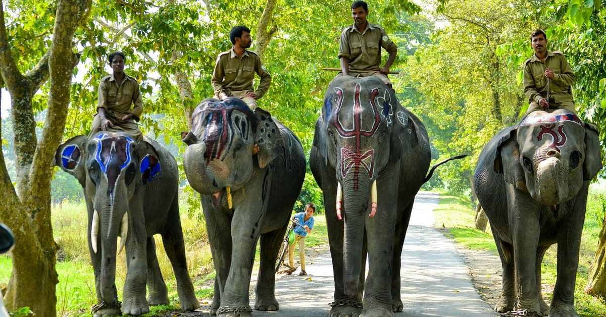 Elephants are used extensively in national parks. Picture Courtesy: Wikimedia Commons.