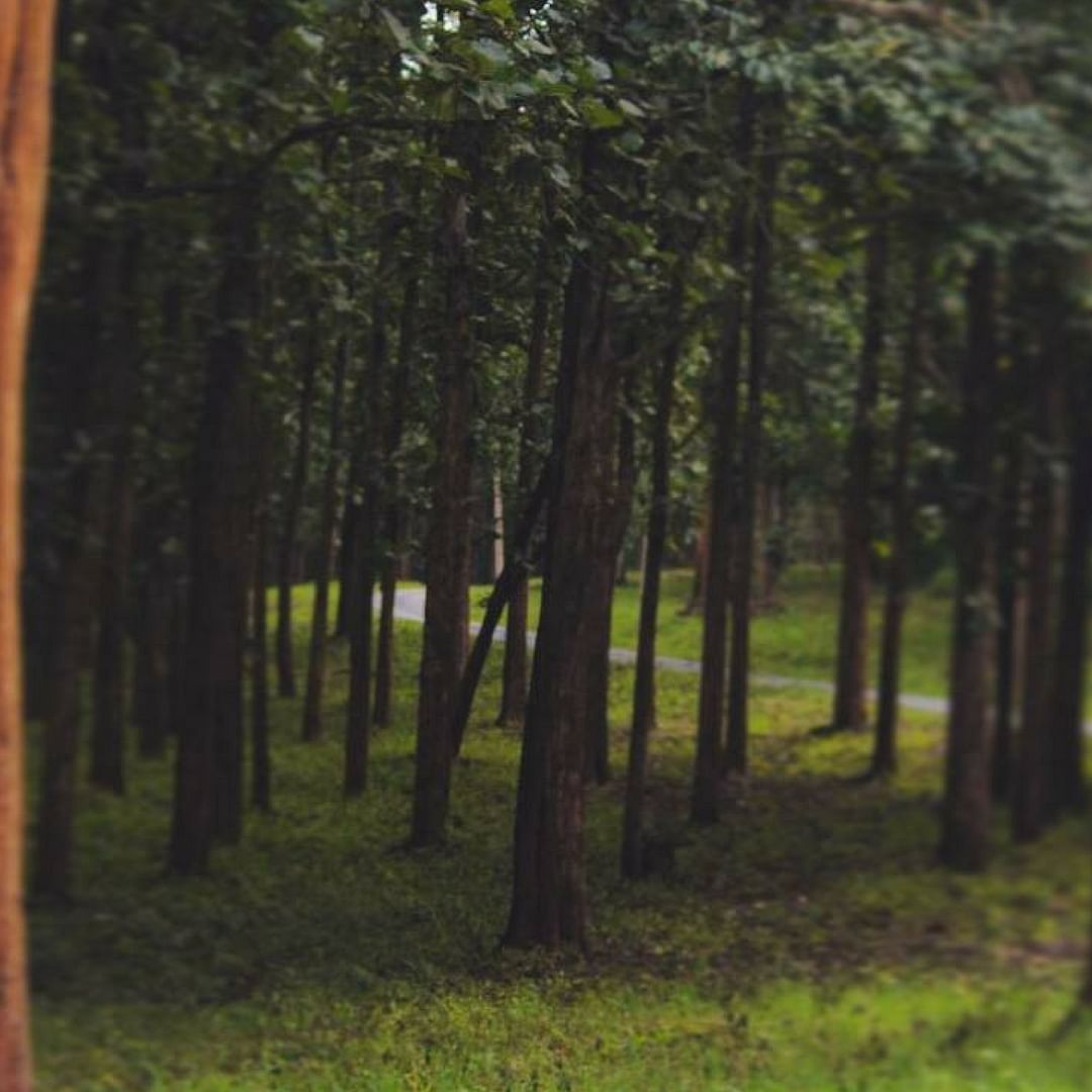 Forests, the lungs of our nation. India. Picture Courtesy: Instagram.