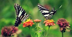 Kerala is all set for a chain of butterfly parks.Representative image only. Image Courtesy:Pixabay.