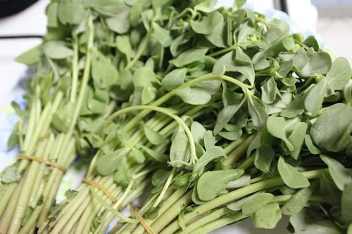 15 Little-Known Leafy Vegetables of India You Need To Try!