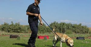 Police dogs are used extensively for solving criminal cases, worldwide.Representative image only. Image Courtesy:Pixabay.