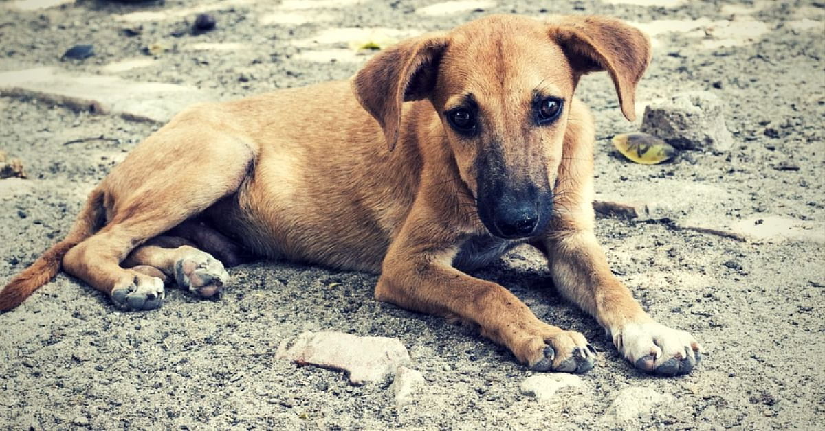 The Roys bought Gulgul, their pet dog, home from a park when he was a pup.Representative image only. Image Courtesy:Pixabay.