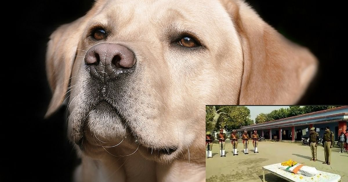 This Incredibly Brave Police Dog Got a Full Guard of Honour at His Funeral