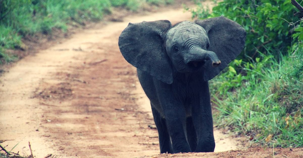 Video: How A Village Came Together to Rescue A Baby Elephant From a Well