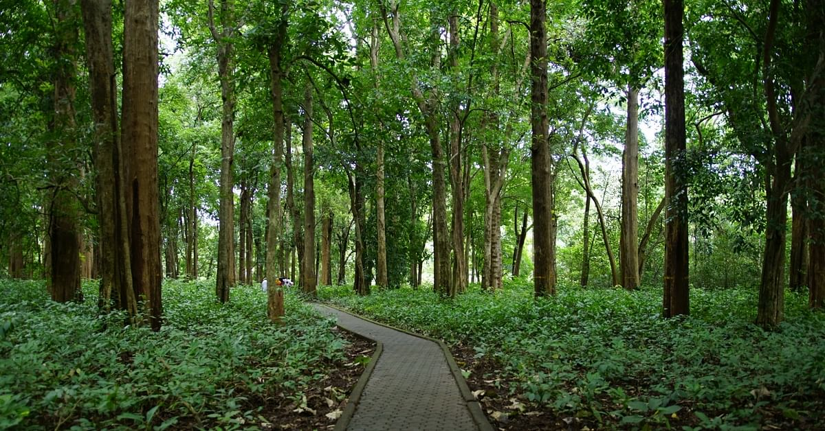Nilambur Teak Becomes The First Forest Produce To Get Its