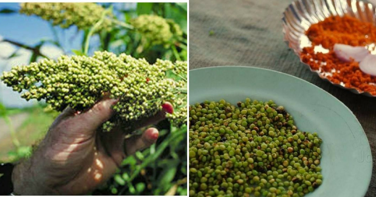 Thanks to This Humble Winter Delicacy, Foodies Are Flocking to Maharashtra Farms!