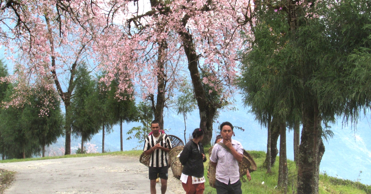 The People of Sikkim Can Now Adopt a New Sibling — a Tree!
