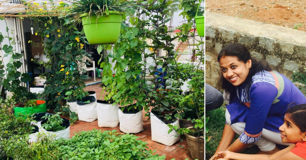 Using No Pesticides, This Lady Grows Over 34 Veggies & Fruits on Her Rooftop!