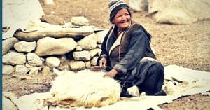 Sourcing the raw material for Pashmina. (Source: Looms of Ladakh)