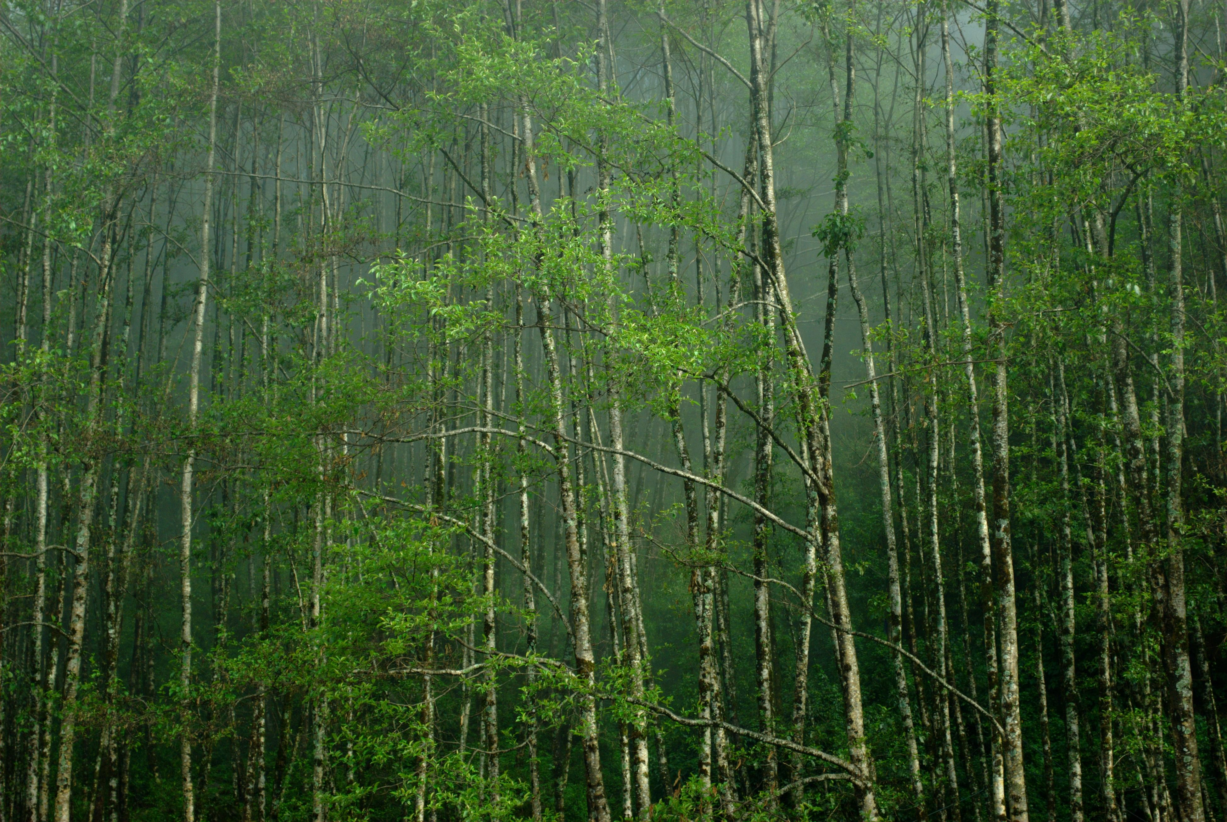 Image result for forests of sikkim