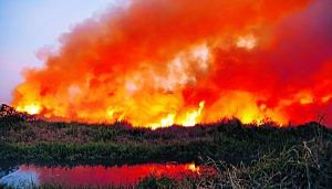 Bellandur lake fire earlier this year. (Source: Facebook)