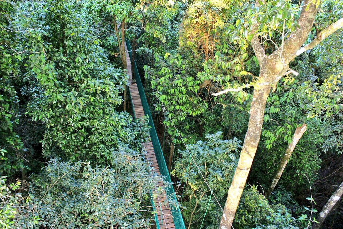 After being certain that this project will cause no harm to the ecosystem and ecology of the Western Ghats it was given the green signal. & Karnataka All Set to Unveil Indiau0027s First Ever Canopy Walk on ...
